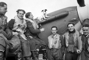 Polish squadron 303_BoB_dog